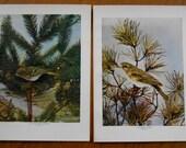 Vintage Bird Prints, Set of 2, Vireo, Kinglet, 1902 Antique wall art, decor