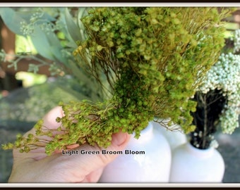 Green Broom Bloom-Floral Filler-Small flowers-Small bundle-Wedding floral
