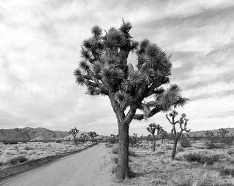 Joshua Tree California Photography, Desert Print, Black & White Photography, High Desert Landscape Photography, Mohave Print, Cactus Print