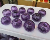 Glass Sea Urchin Shells, ...