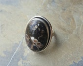 Turritella Agate Sterling Silver Ring