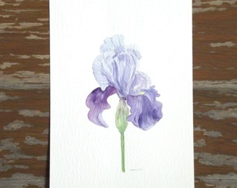 small painting iris watercolor flower painting violet