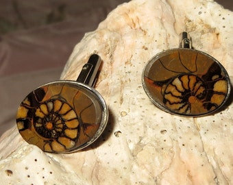Ammonite Fossil Stone Sterling Silver Cuff Links Torpedo Links Oval