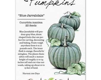 Pumpkin Seeds, Blue Jarrahdale (Cucurbita maxima) Non-GMO Seeds by Seed Needs
