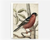 """Vintage Bird Etching Collage Greeting Card No. 5, Blank Note Card, 5""""x7"""" Note Card"""