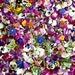 Wedding Confetti, Dry Flowers, Confetti, Dried Flowers, Tossing Flowers, Rose Petals, Flowers, Daisies, Pansy, Real, Aisle Decor, 30 US cups