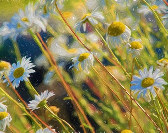 DIZZY DAISIES No.1 - whimsical art print, floral wall decor, sunny field of flowers, painted photo, nature prints