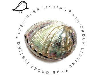 PRE-ORDER - Gray Abalone Shell Minaudiere / Evening Clutch Bag