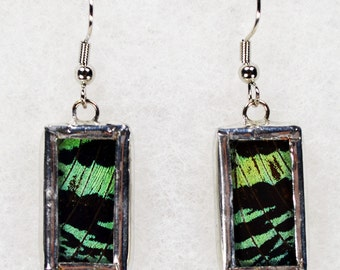 Real Butterfly Earrings - Madagascar Sunset Moth - Glass and Lead Free Solder