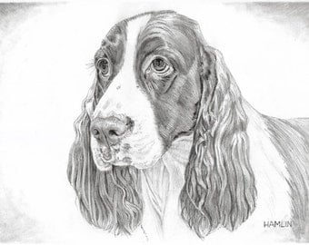 Springer Spaniel, Hobo - Open edition print of an original drawing (fits 11x14 frame)