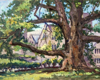 Wide Reach, Old Tree at Rhoads, Bryn Mawr. Original Oil Painting on Panel, 9x16 American Impressionist Landscape, Signed Original Fine Art