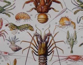 """ANTIQUE FRENCH Book Illustration """"CRUSTACÉS"""" (Crustaceans) by Adolphe Millot Nouveau Larousse Illustré 1929"""