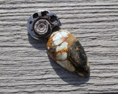Pyritized Ammonite fossil and/or 7 dwarfs turquoise Cabochon set