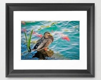 Fine Art Print Duck Koi Water Pond