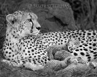 SNUGGLE BABY CHEETAH Photo, black and white Print, Mom and Baby Animal, African Wildlife Photography, Wall Decor, Safari Baby Nursery Art