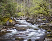 Smoky Mountain Stream in Spring