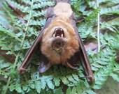 RARE Teddy Bear Sleeping Bat - SHIP FREE
