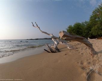 Hawaii Driftwood Poster