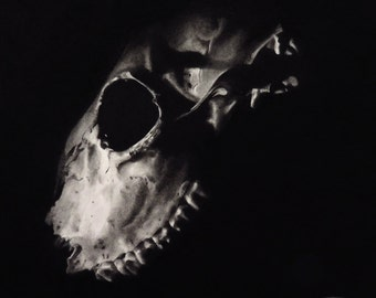 Skull 2, original charcoal drawing, halloween art, skull drawing, black and white, pencil drawing, skull art, gothic art, skull picture