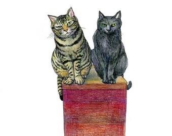 A4 Cat Print - Shuntaro and Sumi