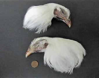 2 White Dried Chicken Birds Heads Art Craft Taxidermy