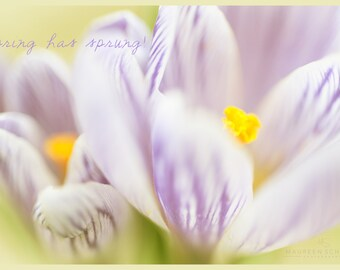 Spring Postcards, Flowers, Easter Postcard, Nature Photography, Fine Art Photography, Postcard