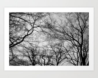 Tree Silhouettes Photography Print