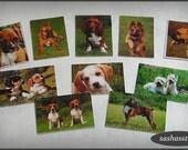 Tiny dog pictures, photos, postcards, 1:12 dollhouse miniature home decor accessory handmade miniatures