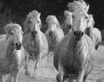 Six Camargue Horses Running - Fine Art Horse Photograph - Horse - Camargue - Horse Photograph - Black and White