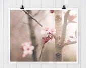 Pink Cherry Blossoms print, spring nature print, fine art photo, branches, trees, nature photography, cherry blossoms, soft pink home decor