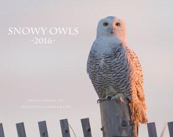 Snowy Owl Calendar - 2016