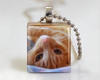 Sweet Little Beige Kitten - Scrabble Tile Pendant - Free Ball Chain Necklace or Key Ring