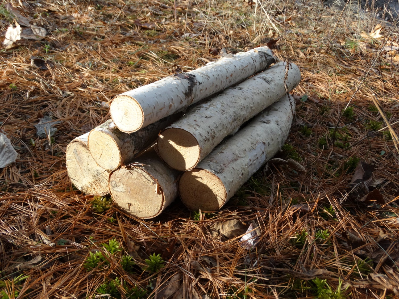 white birch logs 6 white birch logs rustic craft supply
