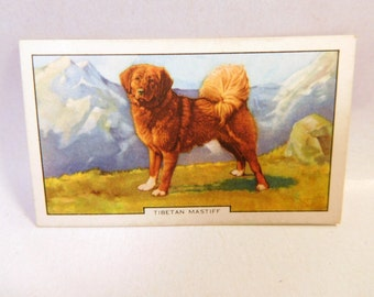 Vintage TIBETAN MASTIFF DOG 1938 Gallaher Cigarette Tobacco Card 2nd Series #14