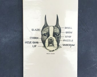 Print of a dog - Boston Terrier
