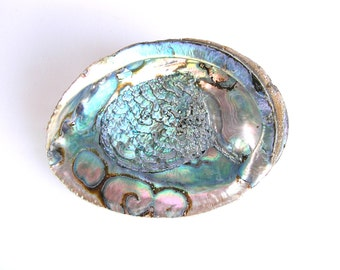 Abalone Shell, Natural Abalone, Mother of Pearl, Beach Decor, Home Decor, Seashell, Smudging, Soap Dish,
