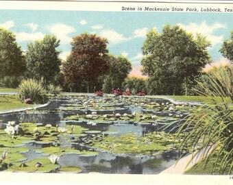Vintage Linen Postcard....Scene in Mackenzie State Park, Lubbock, Texas..Unused...no. 3578