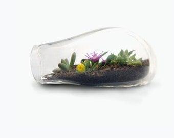 SALE Glass Terrarium, Terrarium, Blown Glass Terrarium, Terrarium Kit, Succulents, Glass Terrarium, Glass, Garden