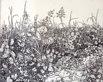 Detailed intaglio limited edition etching spring