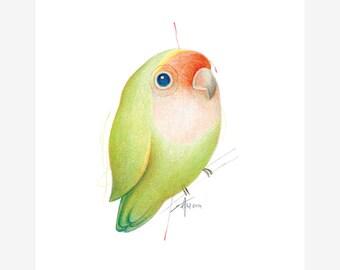 Peach Faced Lovebird Bird Print A5