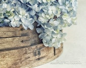 Flower Photography, Modern Rustic Farmhouse Decor, Fixer Upper Style Wall Art, Blue Hydrangeas, French Country Cottage Decor | 'Faded Denim'