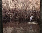 Glass Cutting Board - Great Blue Heron In the Reeds 7.75in  x 10.75in