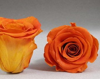 Sunset Orange Yellow Roses 6 Preserved Roseheads 2.5 inches diameter Ideal for Wedding Bouquets and Floral Arrangements DIY Brides