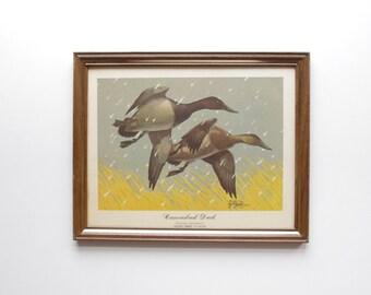 Canvasback Duck Framed Print - Les Kouba - Wildlife Art - Wallhanging