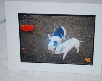 photo card, piglets, photography