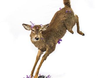 Preternatural Deer