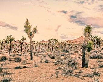 Old West Desert Landscape. Joshua Tree. Mohave Desert. Southwest Images. California Desert. Fine Art Photography by Liz and Rich.