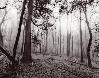 Foggy Woods, Door County, Landscape, Black & White photography, Metallic Paper, Vivid Metal, Metal Print, 5x7, 8x12, 16x23.5