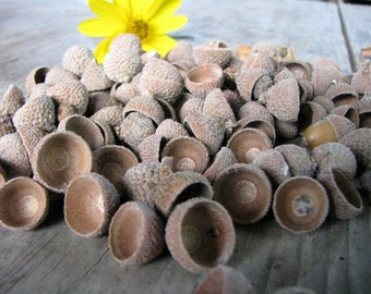 Natural Acorn Cap, rustic Autumn crafts and supply, set of 50 , 100, 150...
