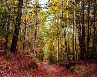 Landscape Photography,  Dupont National Forest, North Carolina Mountains, Prints, Various Sizes